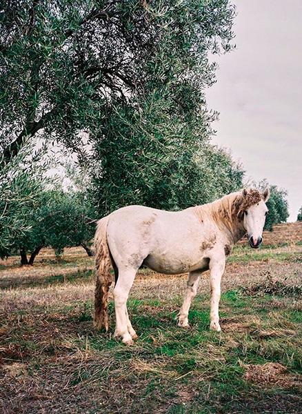 007 caballo
